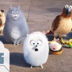『ペット / Secret Life of Pets』は『ズートピア』とは全く違う映画でした